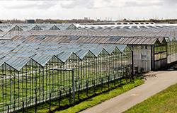 Verhuren tuinbouwkas, waardestijging ondergrond belast?
