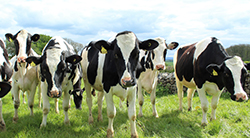 Bereken btw op voorraad dieren en agro-producten